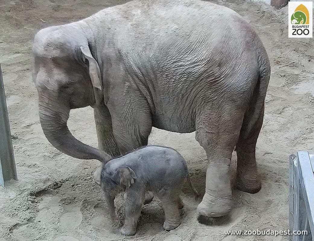בודפשט עם ילדים - גן החיות