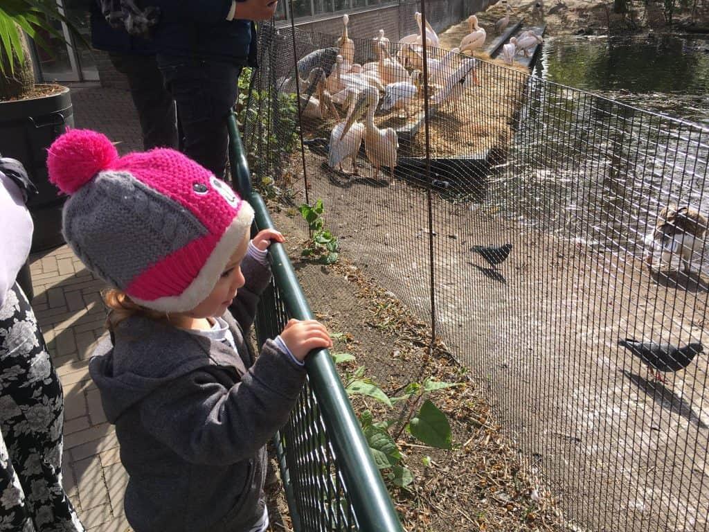 הולנד עם ילדים - גן החיות ארטיס