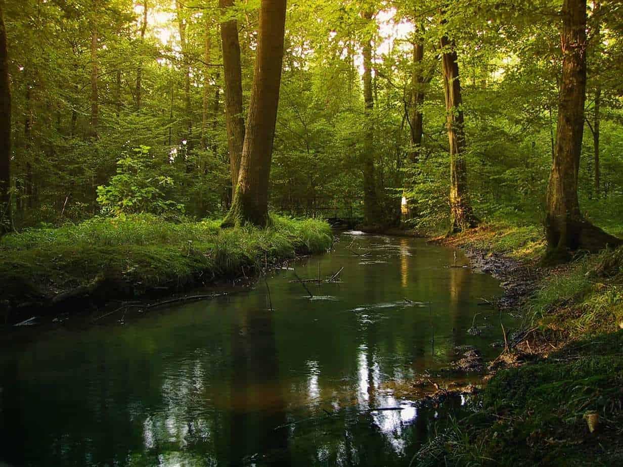 היער השחור עם ילדים - מסלול, המלצות ואטרקציות