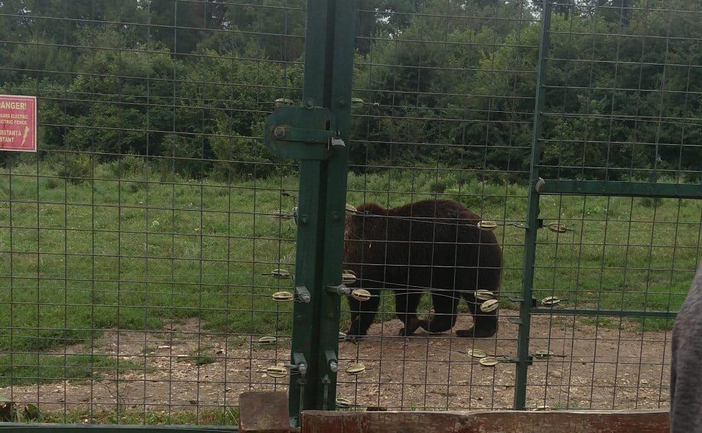 מקלט הדובים בזרנשטי