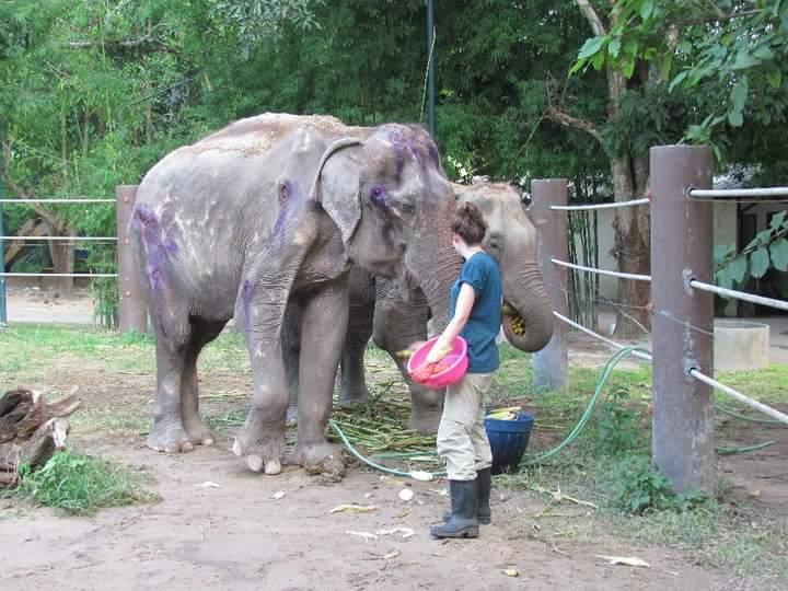 התנדבות בתאילנד