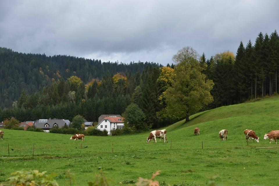 אוסטריה התחתונה עם ילדים - Lunz Am See