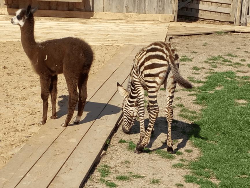 סלובקיה עם ילדים - גן החיות Zoo Kontakt