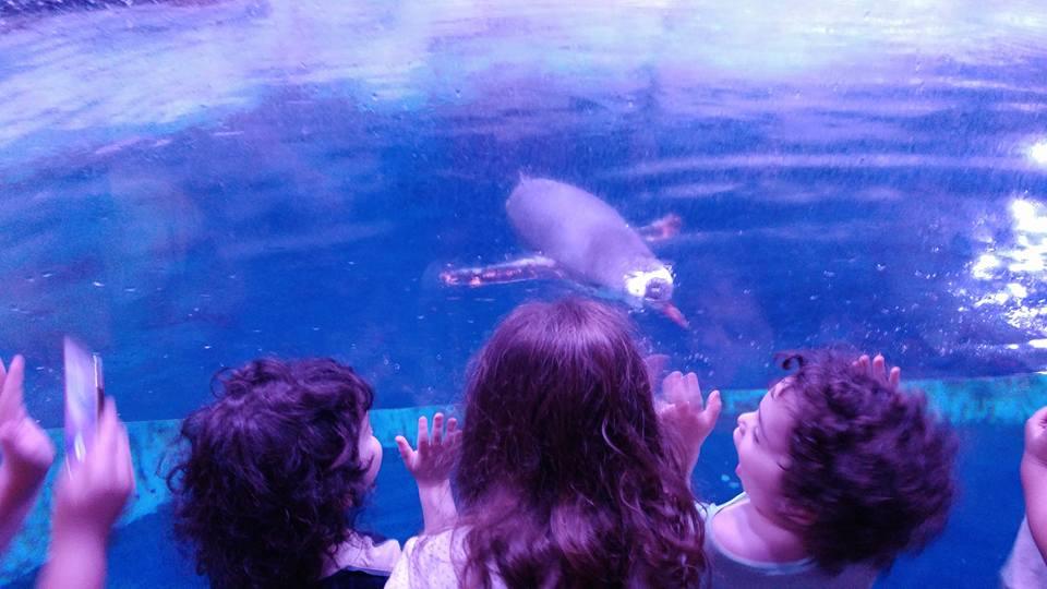בנגקוק עם ילדים - Sealife Bangkok - הפנגווינים