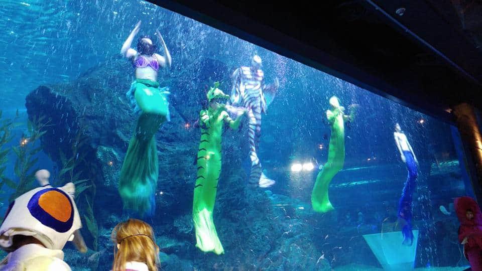 בנגקוק עם ילדים - Sealife Bangkok - מופע של בתולות הים