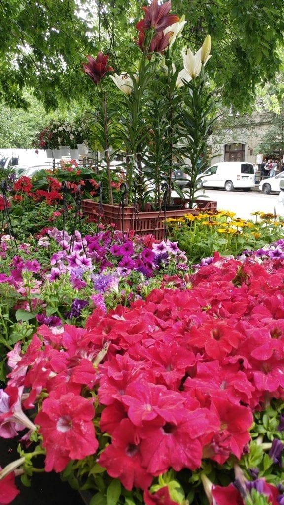 דברצן עם ילדים - שוק הפרחים