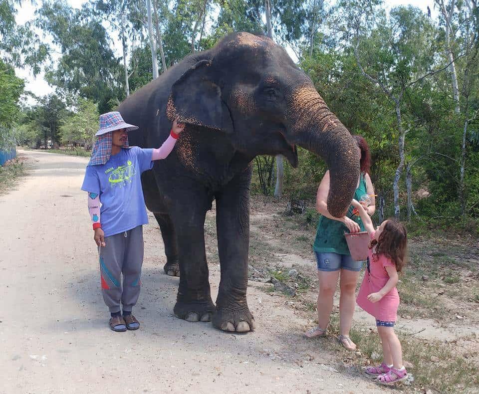 אטרקציות לילדים ומתבגרים - Wildlife Friends Foundation Thailand