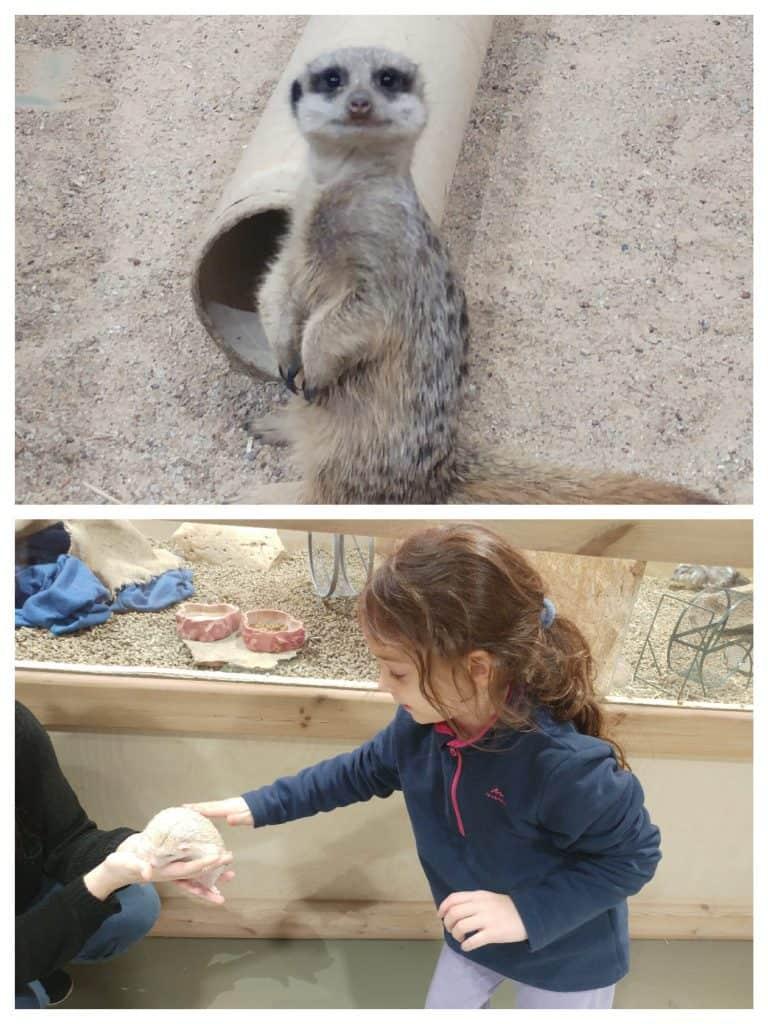 ליטא עם ילדים - Mega Zoo
