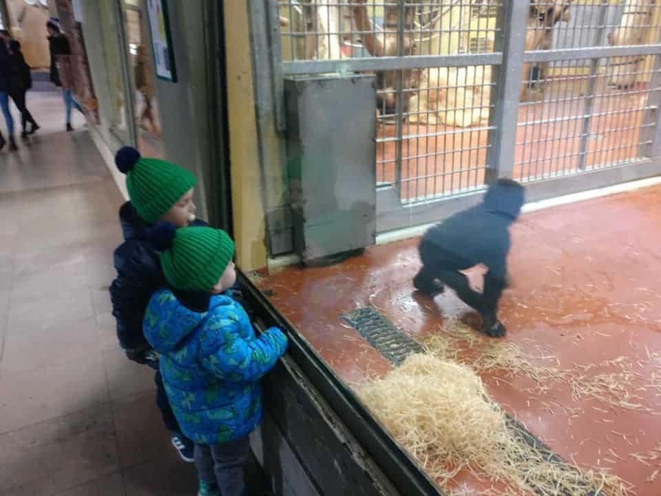 בודפשט עם ילדים בחורף - גן החיות