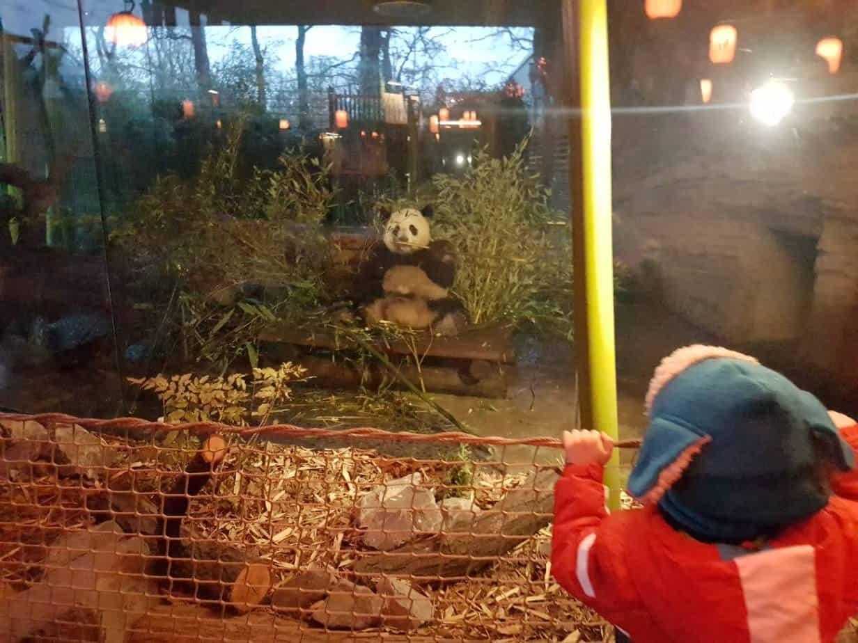 ברלין עם ילדים בחורף - גן החיות בברלין - הפנדה