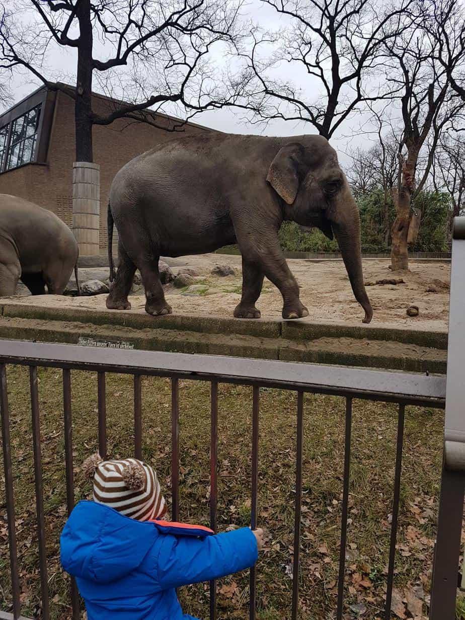 ברלין עם ילדים בחורף - גן החיות בברלין