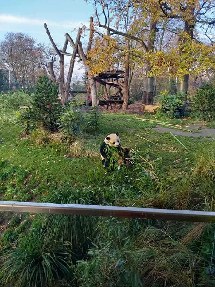 ברלין עם ילדים בכריסמס - גן החיות
