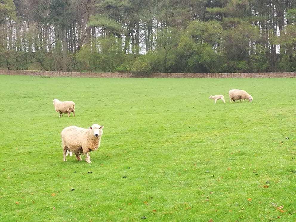 טיול בת מצווה לפריז ולאנגליה - Cotswolds הכבשים