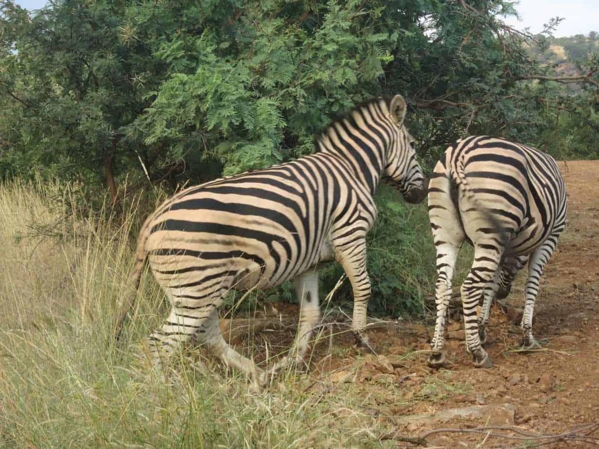 ספארי באפריקה עם ילדים - ספארי