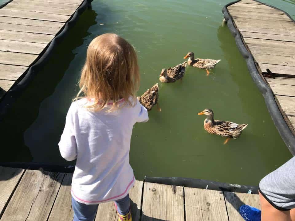 גיאורגיה עם מתבגרים - מאכילה ברווזים