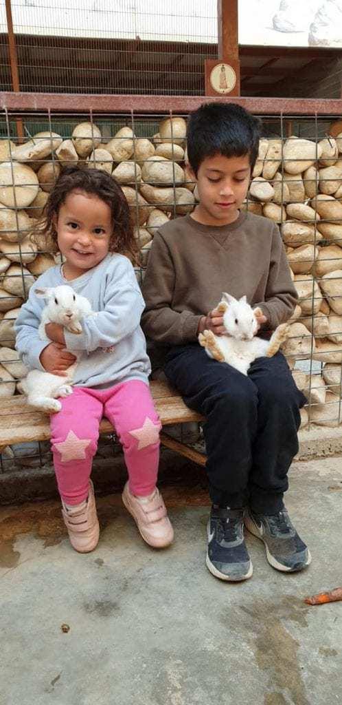 חוות האנטילופות - לינה בערבה למשפחות עם ילדים - פינות ליטוף
